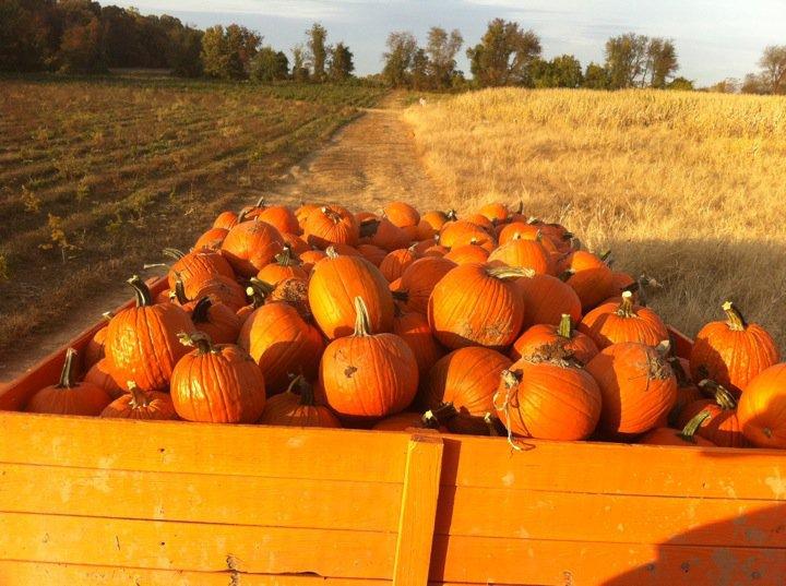 Pumpkin: Not just a fallfood!
